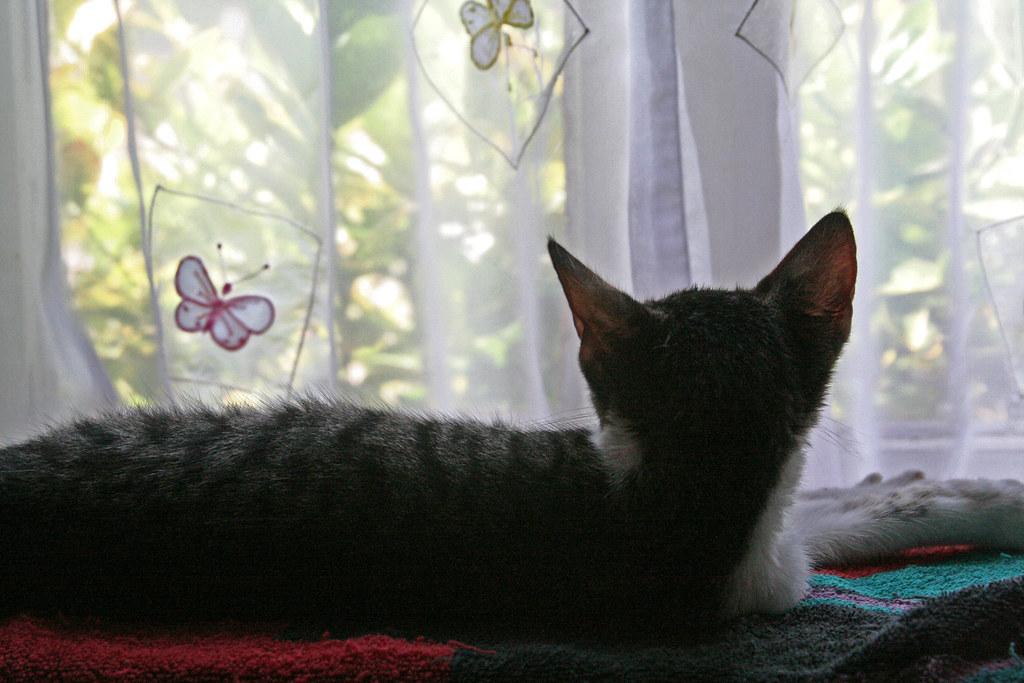 The Kitten In My Window