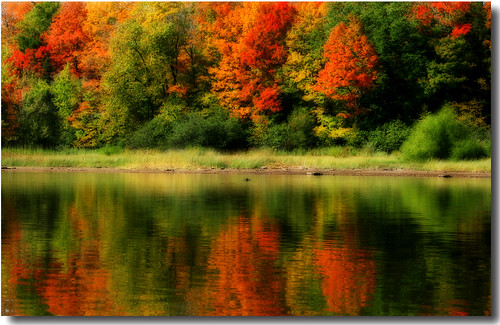 autumn nature wisconsin colorful searchthebest mercer orton northwoods naturesfinest blueribbonwinner specnature nature55 impressedbeauty goldstaraward