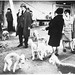 Crufts Dog Show 1968
