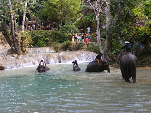 Elephants in the water at Tat Sae Waterfalls