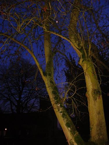 blue sky moon tree nature night amor naturesfinest adifferentpointofview collegegrounds concordians natureselegantshots skyascanvas
