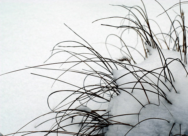 de blanc ressemble un grain de beaut noir avec des poils flickr photo sharing. Black Bedroom Furniture Sets. Home Design Ideas