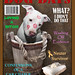 Funny Dog Days Magazine Cover, Rescued White Puppy Dog Kahuna Luna featured on the cover! American Staffordshire Terrier, Pit Bull Fame by Beverly & Pack