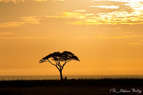 africa travel sunset wild plants sun tree tourism nature beautiful beauty silhouette sunrise landscape golden scenery colorful warm natural bright kenya african relaxing scenic safari clear destination savannah backlit plains bushes idyllic acacia radiant savanna amboseli