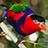 the Top 20 Birds group icon