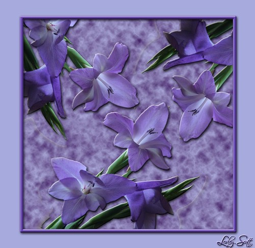 Lavender Iris_with background and frame