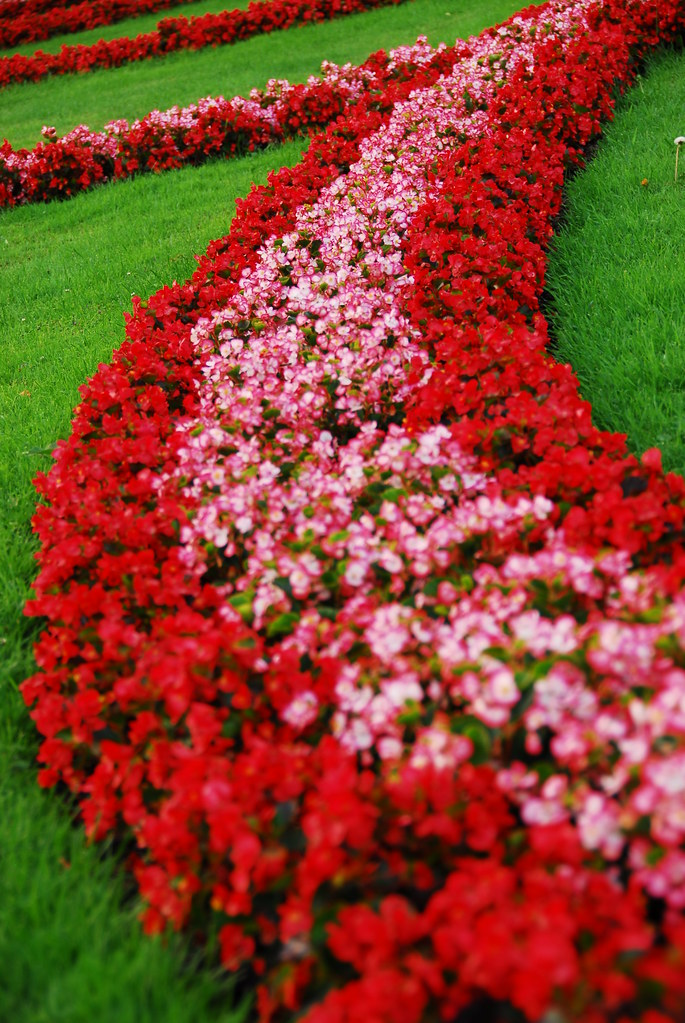 mirabell gardens red flowers