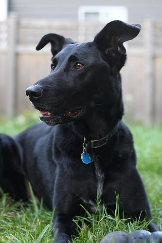 My dog, 42