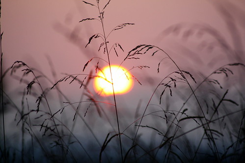 sunset field grass geotagged nc weeds bokeh depth lincolncounty doff goldstaraward naturelimited geo:lat=3553048 geo:lon=81263551 ncpedia