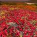 Fall Season In Alaska by kevin mcneal