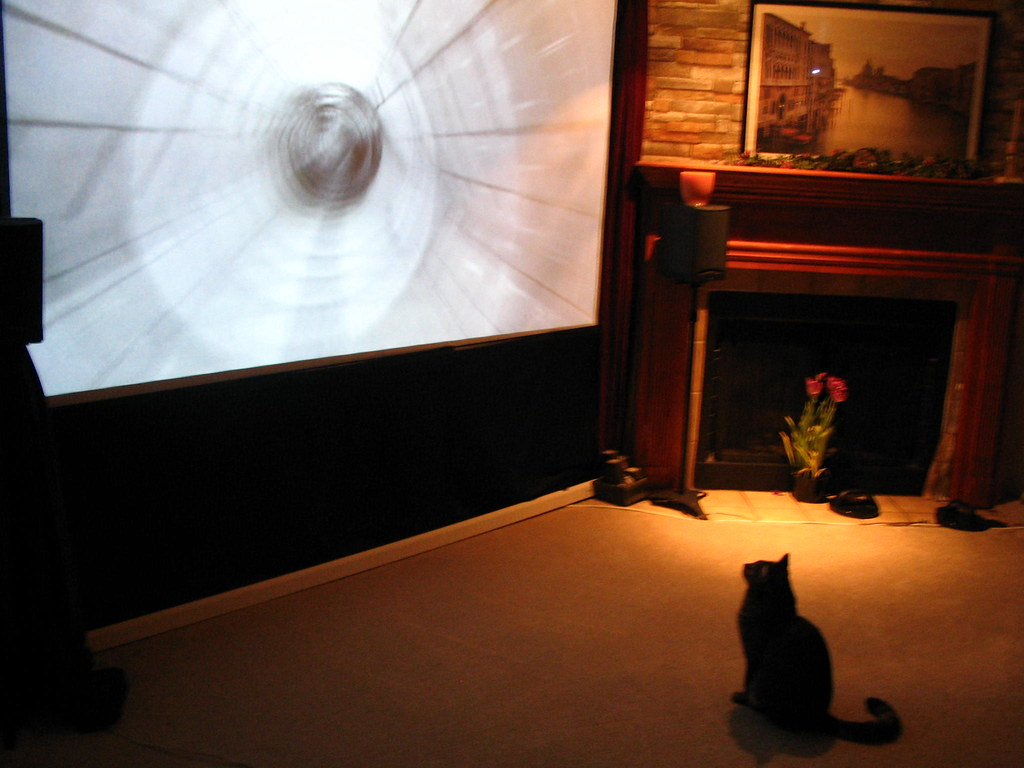 cat watching tv big screen projector