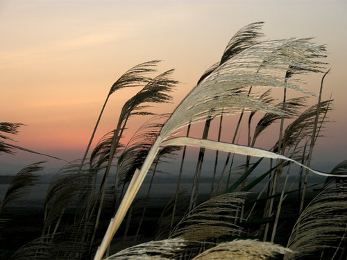 flickr estrellas novavitanewlife olétusfotos sunset sundown windy shadows platinumheartaward saltlake larnacasaltlake sky colourful colourfulsky colorful colorfulsky 1001nights aplusphoto awesomeshot cyprus kypros larnaka larnaca abigfave olympus olympusu820