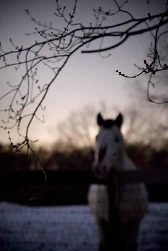trees winter horses snow animals dusk branches sunsets ponies newyorkstate bb bedandbreakfast horsies hudsonvalley horsefarm rhinebeckny whistlewood