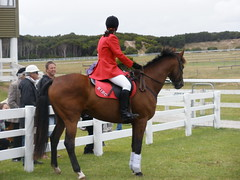 western riding(0.0), modern pentathlon(0.0), dressage(0.0), jumping(0.0), show jumping(0.0), western pleasure(0.0), endurance riding(0.0), animal sports(1.0), equestrianism(1.0), english riding(1.0), eventing(1.0), mare(1.0), stallion(1.0), hunt seat(1.0), equestrian sport(1.0), sports(1.0), animal training(1.0), equitation(1.0), horse(1.0), jockey(1.0), pasture(1.0),