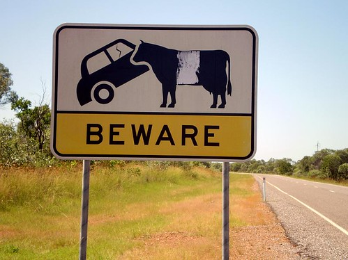 Beware of the Cow