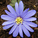 Blue Anemone - Photo (c) Stefan Jansson, some rights reserved (CC BY-NC-SA)