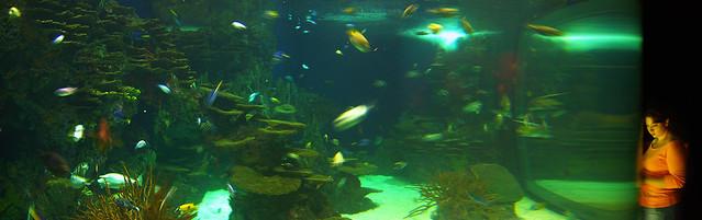 Ripleys Aquarium Gatlinburg Tennessee Explore