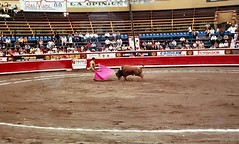 rodeo(0.0), equestrian sport(0.0), performing arts(0.0), bull riding(0.0), animal sports(1.0), cattle-like mammal(1.0), bull(1.0), sport venue(1.0), event(1.0), tradition(1.0), sports(1.0), bullring(1.0), matador(1.0), performance(1.0), bullfighting(1.0), traditional sport(1.0),