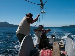 fish(0.0), recreational fishing(0.0), big game fishing(0.0), fishing(1.0), sea(1.0), ocean(1.0), jigging(1.0),