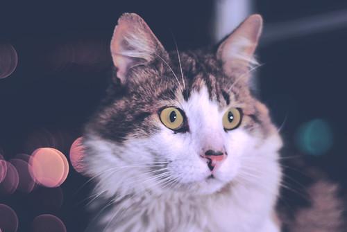» Mi Gatito Ramiro