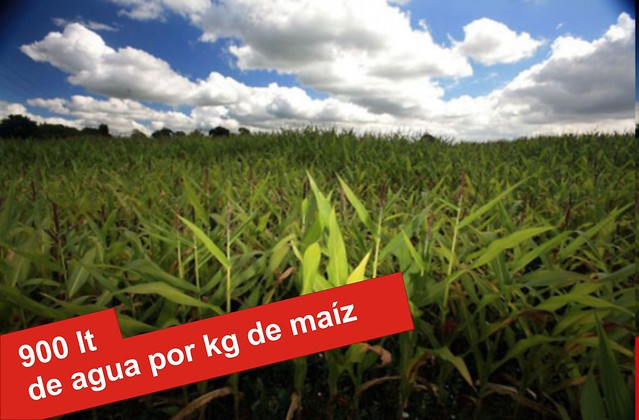 kg de maiz