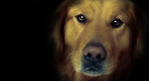 my dog, a soul