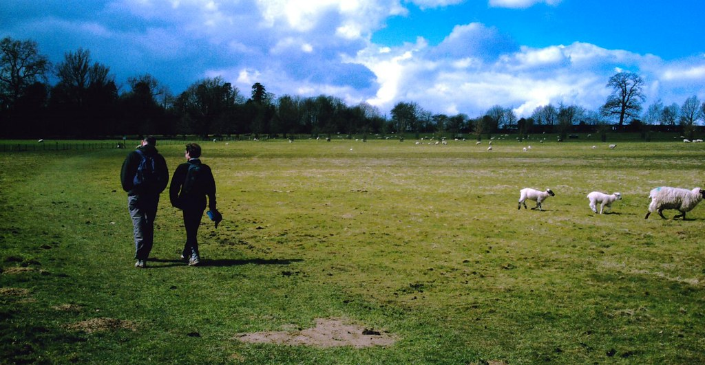 Book 1 Walk 15 Leigh to Tunbridge Wells Sheep warriors near Penshurst Estate. DGA. Vivitar 5199 5mp