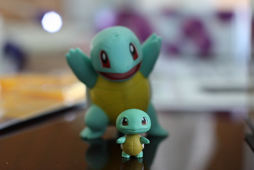 Squirtles_IMG_0228