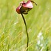 NL Flora and Fauna
