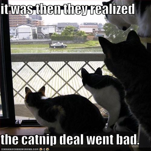 catnip-deal-has-gone-bad