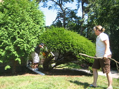 flower(0.0), hedge(0.0), plantation(0.0), shrub(1.0), garden(1.0), tree(1.0), plant(1.0), gardener(1.0), lawn(1.0),