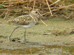 濕地內的鳥類