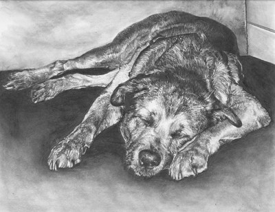 In Memory Of Chico(My Dog) Pencil Drawing