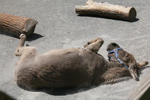 Donkey down