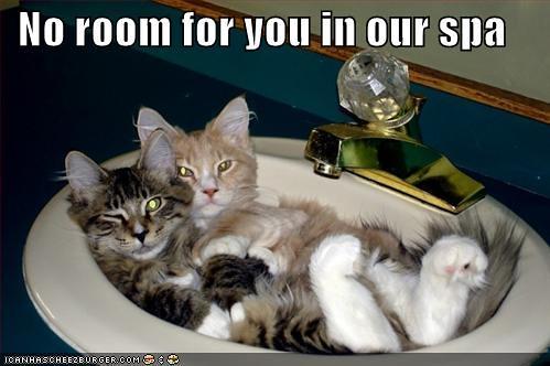 'Pas de place pour toi dans notre spa' - Un Lolcat - ©Icanhazcheezburger.com