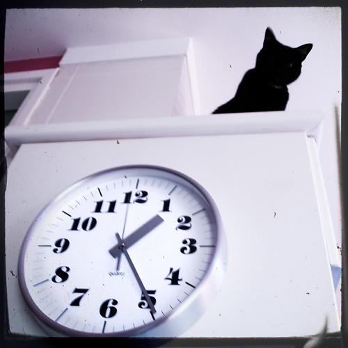 Cat & Clock