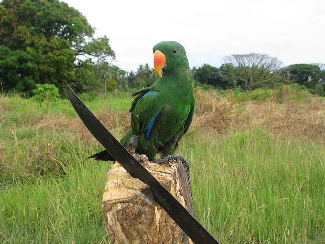 how to make parrot green colour