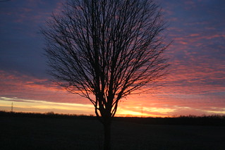 Ohio: tree + sunset