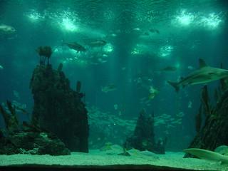 2002-10-26 11-15 Andalusien, Lissabon 295 Lissabon, Pavilhao dos Oceanos