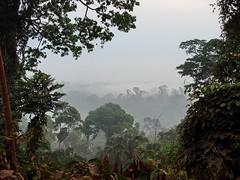巴西北部山區的亞馬遜雨林(圖片提供: Shirley Sekarajasingham)