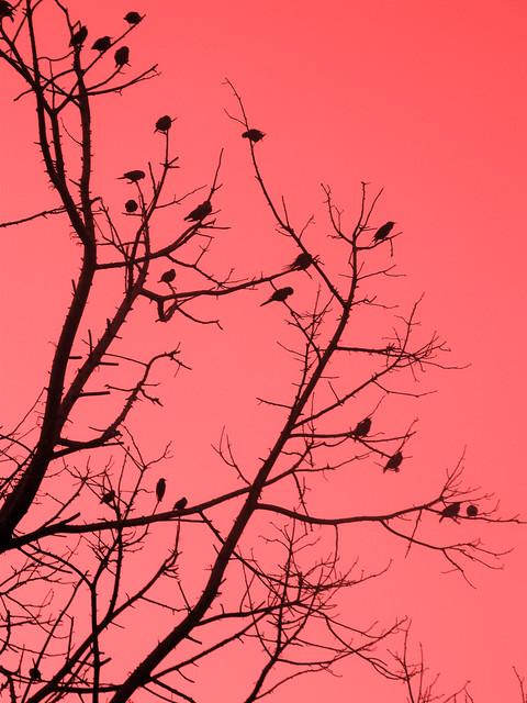 http://www.flickr.com/photos/daniela_petroleuse/2762655989/