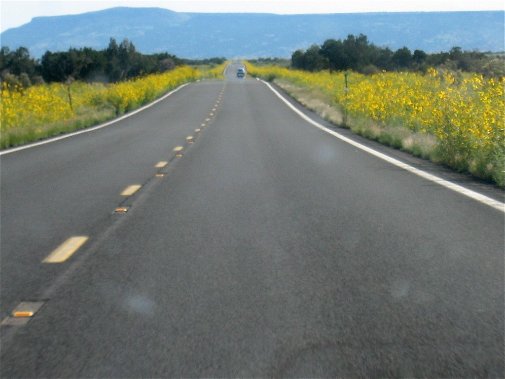 Sunflower Highways