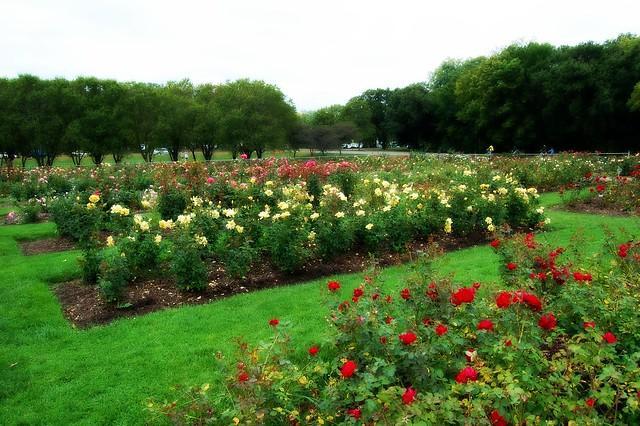 lyndale park rose garden flickr photo sharing