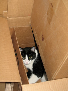 Oliver in Nested Boxes