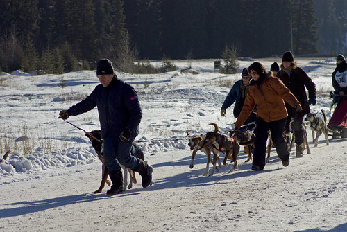 3216530393 3ea7950584 Elkford Sled Dog Races