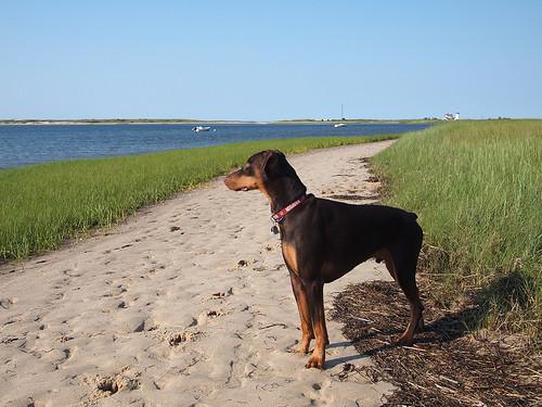 beachcombing 3
