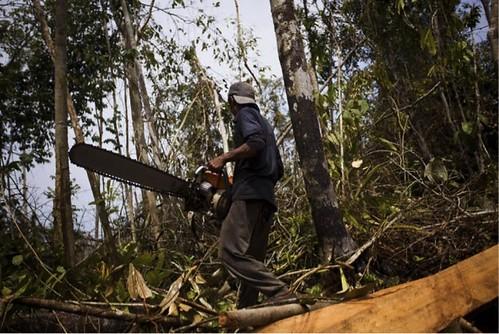 印度尼西亞蘇門答臘島的熱帶雨林盜伐(圖片來源:Ulet Ifansasti 蓋蒂圖片社)