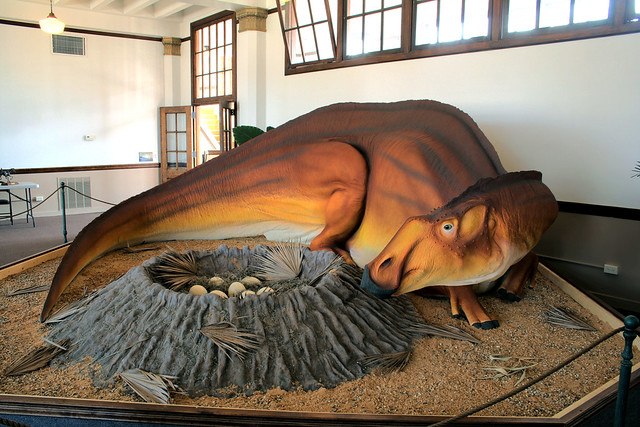 Bollinger County Museum Of Natural History