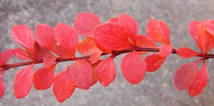leaves: upstate SC