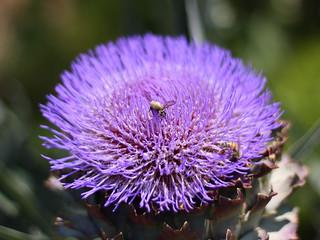 Bees Butt